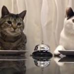 ベルを鳴らせばご飯に有り付けることを学んだ2匹の猫。横に並んで試してみた結果…