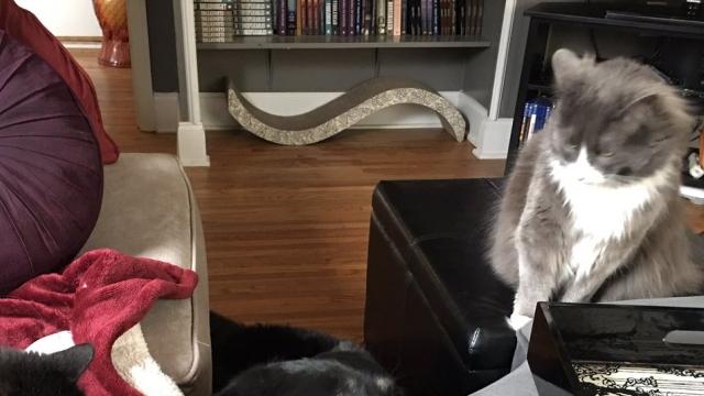 2匹の先輩猫に見られていることに気付いたワンちゃん → ビビる表情がおもしろ可愛い!