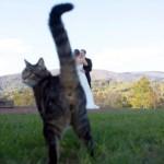 シャッターが落ちる瞬間、絶妙なタイミングで割り込む猫たちの写真アレコレ 15枚