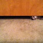 ドアの隙間から顔を覗かせるぽっちゃり猫のまさかの行動に唖然!