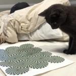 動いて見える錯視画像に翻弄される猫(笑)