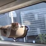 車の窓に猫専用の特等席を設置したら、想像以上にリラックスしてご満悦な猫(笑)