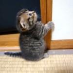 足元の覚束ない小さな子猫 → 練習を重ねて2本足で立って遊べるまでに…