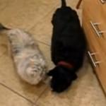 最近、なぜか愛犬が肥えだしたという飼い主さん、その原因が明らかに…(笑)