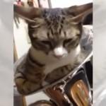 ユーフォニアム(楽器)にスッポリ収まった猫 → 飼い主がそのまま吹き続けると…