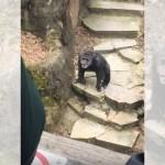 動物園でチンパンジーから思わぬお土産を貰ったおばあちゃん(笑)