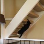 これは予想外!? 忍者のように階段をよじ登る猫(笑)