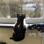 窓際の狭い棚の上で寝ていて床に落ちそうになった猫 → 通りかかった別の猫が…