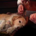 パパさんの奏でるギターの音色にうっとり、とっても幸せそうなワンちゃん♡