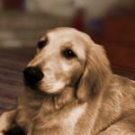 サイズを間違え小型犬用ベッドを購入 → それでも我慢して使ってくれる健気な愛犬