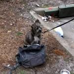 ゴミ箱に縛られた捨て犬。その傍らには一枚の悲しいメモ書きが…