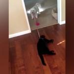 外に出たくない猫を無理やり散歩に連れ出そうとするワンコ(笑)