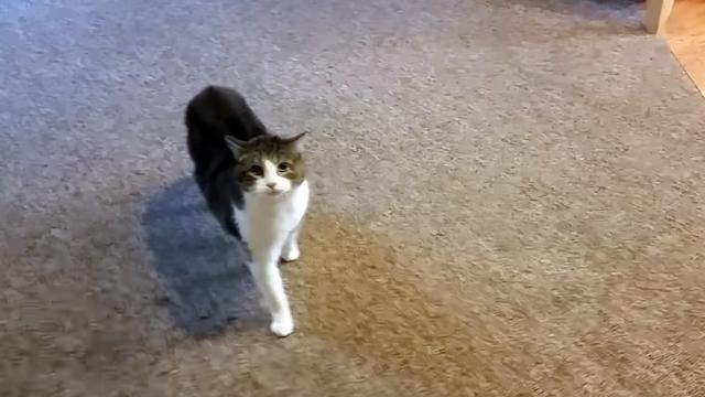 隣人が留守の間、猫の世話を頼まれた男性 → 荒ぶる猫に戦々恐々(笑)