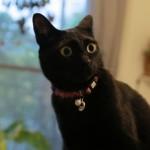 「え、なんやこの人」久しぶりに会った姉に捕獲された猫の反応…かわいすぎ!
