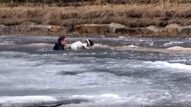 氷の張った遊水池に落ちた愛犬を救うべく、湖に飛び込んだ飼い主
