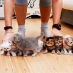 元気いっぱいの10匹の子猫を横一列に整列させよう試みた結果…(笑)
