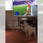 サッカーを観戦していて、コーナーキックのボールに反応するワンコがおもしろい(笑)
