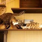 迫真の演技力(笑)!?オスカーにふさわしい劇的な猫たち 16選