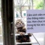ガラスドア越しに屋内の様子をうかがう猫 → ドアにはこんな貼り紙が…(笑)
