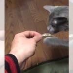 猫に煮干しをあげたら、食べるのが下手すぎた(笑)