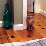 新しい家族となった保護猫。里親のママさんをいつでもどこでも見つめている姿が愛らしい♡