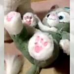 姉に猫のぬいぐるみをプレゼントしたら・・・可愛いことになっていた!