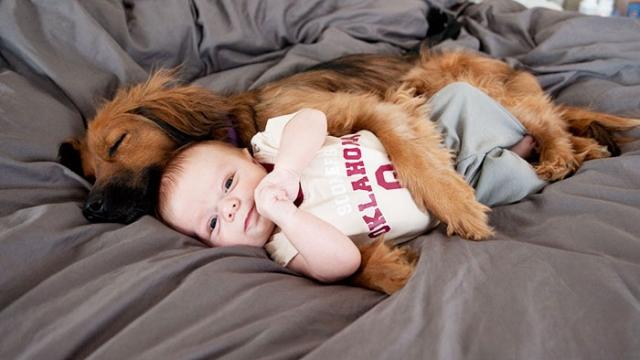 ことわざ…「子供が生まれたら犬を飼いなさい」が心に響く写真集 38選