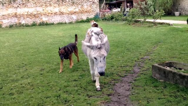 ロバに乗った2匹のネコにお供の犬、なんとのんびりとした和やかな世界♡