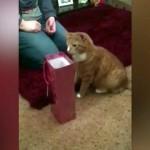 オモチャの入ったワインバッグを覗き込む猫…思わぬ行動に(笑)