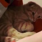 勉強中の男の子の腕に寄り添う子猫。しばらくすると可愛いことに…