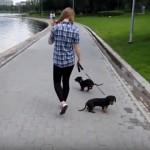 散歩中、ビニール袋に襲われて驚く子犬。慌てて逃げ出した結果、とんでもないことに…