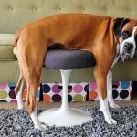 違うそうじゃない(笑)!?・・・家具を理解するのに苦労するペットたち 25選