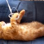 ぷかぷか浮かぶ風船の紐を握りしめたまま眠ってしまった子猫♡