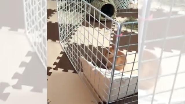 うっそー!?サークルからものの見事に脱出するウサギを捉えた衝撃の映像
