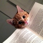 飼い主のプライベート空間に割り込む空気の読めないネコたち 25選