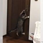 猫がドアを勝手に開けて困るので、新しい取っ手に付け替えることに…