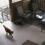 監視カメラが捉えたおもしろい猫の行動・・・どうしてそうなった(笑)