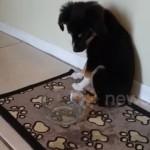 冷たい水を飲むのはこれが初めて・・・あまりの冷たさにびっくりする子犬