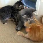 激しくじゃれ合う子猫たち → 突然の乱入者を見て一目散に逃げ出した!(笑)