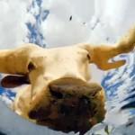 バケツの底にカメラを設置・・・水を求めてやって来た動物たちを捉えたシュールな映像