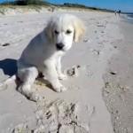 こっちに来ないで!・・・砂浜で穴掘をしていて、押し寄せる波に翻弄される子犬