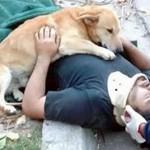 事故で意識を失った飼い主を心配して、側から離れようとしない健気な愛犬に胸が熱くなる