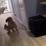 犬に追いかけられるも、優れた身体能力でひらりと身をかわす猫がスゴイ!