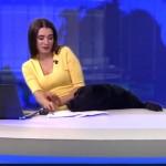生放送中のスタジオに犬が乱入・・・観ていて楽しい放送事故