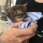 栄養失調と重度の感染症で目も開かなかった子猫 → 救助者も驚くほどの愛らしい姿に
