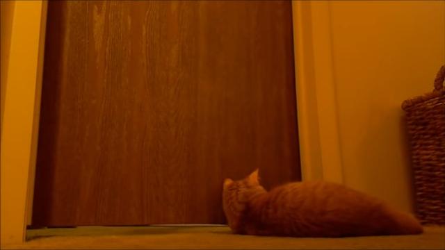 毎朝、飼い主を目覚めさせる最適な方法を発見した猫(笑)