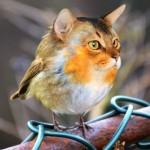 フォトショップの妙技・・・異種動物を合成したハイブリッド画像がおもしろい!