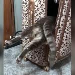 スーツケースに入ることも出ることもできず、悪戦苦闘する猫(笑)