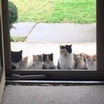 うちは猫を飼ってないんだけど!?…いつの間にか見知らぬ猫が…驚きの瞬間アレコレ 15選