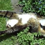 何よりも日向ぼっこをこよなく愛する猫たちのほのぼの写真集 35選